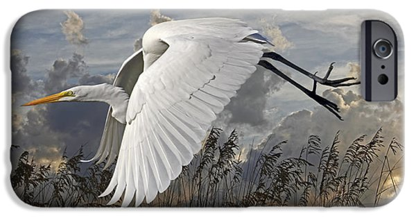 Fauna iPhone Cases - Birds - Beach Beauty - Great Egret iPhone Case by HH Photography of Florida