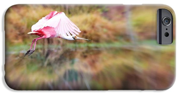 Spoonbill iPhone Cases - Birds Eye View iPhone Case by Carol Groenen