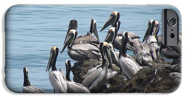 Sea Birds iPhone Cases - Birds Fishing From Rocks iPhone Case by Ted Pollard