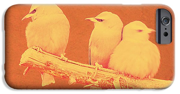 Small Pyrography iPhone Cases - Birds iPhone Case by Girish J