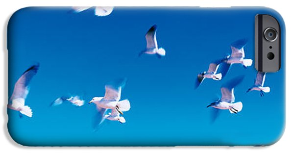 Flying Seagull iPhone Cases - Birds In Flight Flagler Beach Fl Usa iPhone Case by Panoramic Images