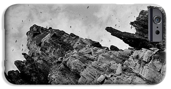 Norway iPhone Cases - Birds Nesting In Cliffs, Norway iPhone Case by Panoramic Images