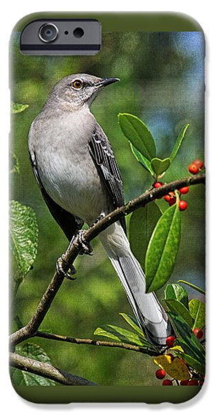 Fauna iPhone Cases - Birds - Northern Mockingbird iPhone Case by HH Photography