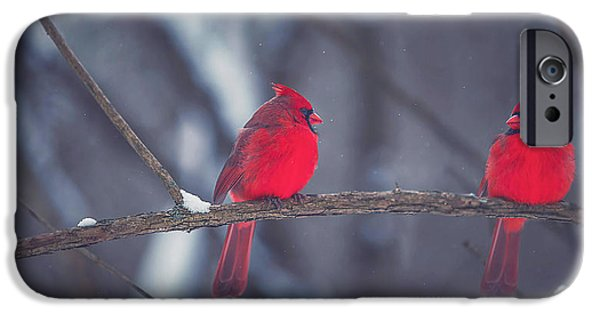 Winter Trees Photographs iPhone Cases - Birds Of A Feather iPhone Case by Carrie Ann Grippo-Pike