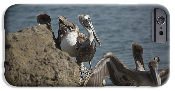 Sea Birds iPhone Cases - Birds of a Feather iPhone Case by Joel P Black