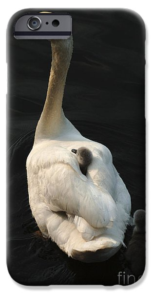 Swan iPhone Cases - Birds Of A Feather Stick Together iPhone Case by Bob Christopher