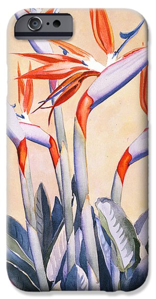Tropical Plant iPhone Cases - Birds of Paradise iPhone Case by Mary Helmreich