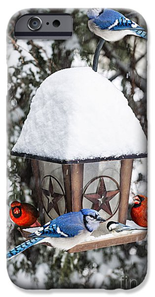 Feeding iPhone Cases - Birds on bird feeder in winter iPhone Case by Elena Elisseeva