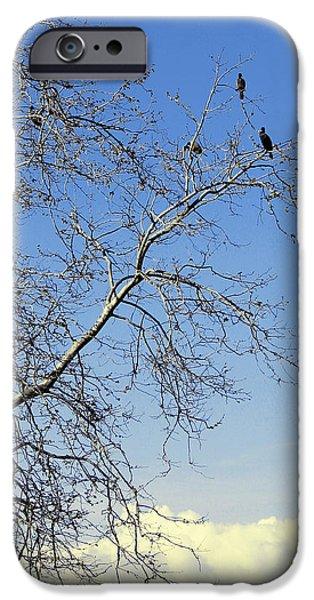 Birds On Limbs iPhone Cases - Birds On Tree iPhone Case by Ben and Raisa Gertsberg