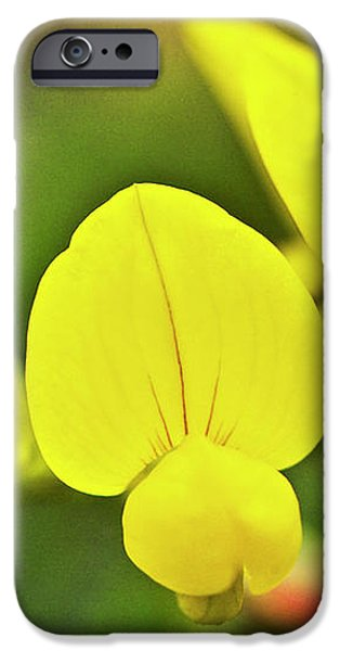 Birdsfoot trefoil in the meadows iPhone Case by Heiko Koehrer-Wagner