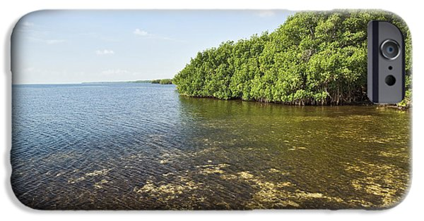 Red Mangroves iPhone Cases - Biscayne Bay Coast 2 iPhone Case by Patrick M Lynch