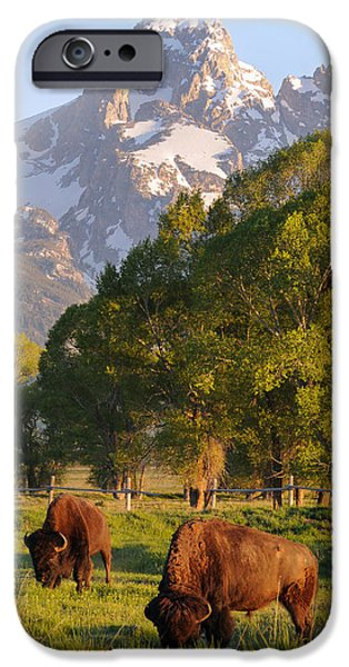 Landscape With Mountains iPhone Cases - Bison and Grand Teton iPhone Case by Aaron Spong