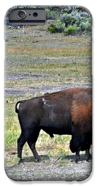 Bison In Lamar Valley iPhone Case by Marty Koch