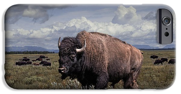 American Bison iPhone Cases - Bison in the Grand Tetons iPhone Case by Randall Nyhof
