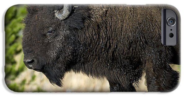 Bison Photographs iPhone Cases - Bison in the Passing lane iPhone Case by Gary Langley