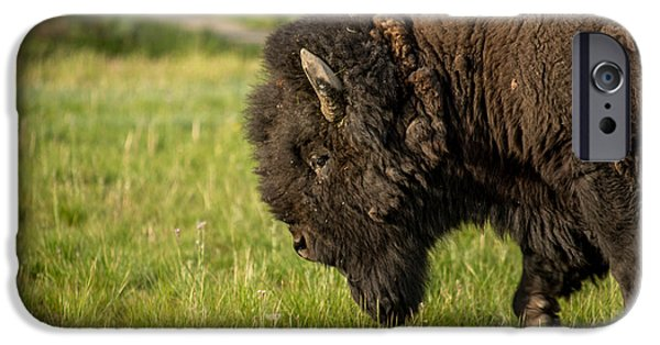 Animals Pyrography iPhone Cases - Bison in Yellowstone iPhone Case by Joel Lavold