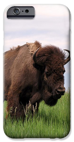 Antiques iPhone Cases - Bison on the Prairie iPhone Case by Olivier Le Queinec