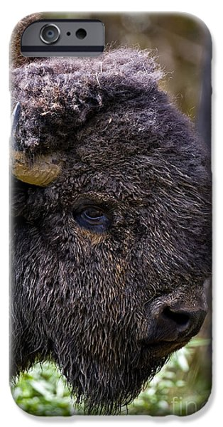 Snake iPhone Cases - Bison Pictures 12 iPhone Case by World Wildlife Photography