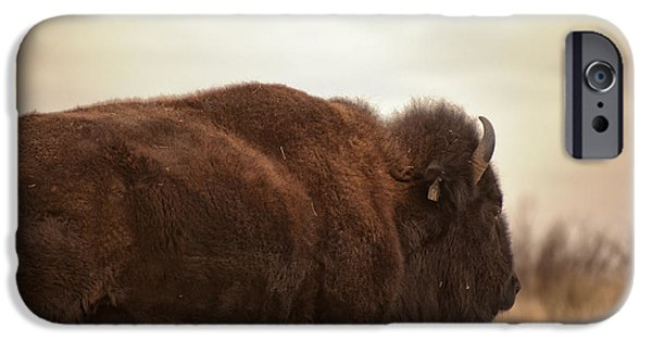 Animals Photos iPhone Cases - Bison Walking Into The Sunset iPhone Case by Melany Sarafis