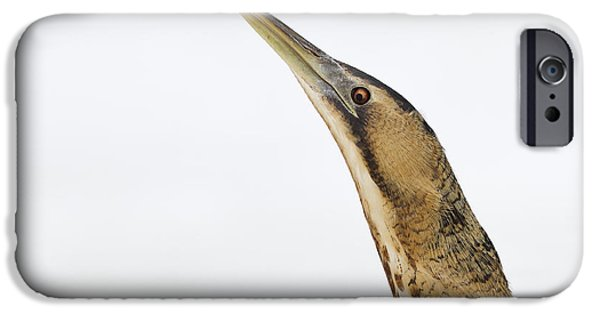 Wintertime Photographs iPhone Cases - Bittern Times iPhone Case by Roeselien Raimond