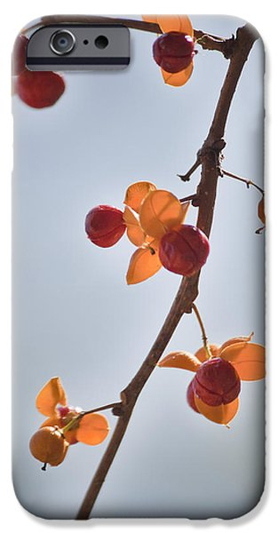 Bittersweet iPhone Cases - Bittersweet Vine iPhone Case by Teresa Mucha