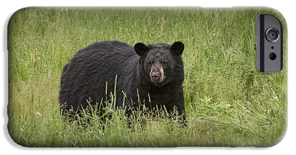 Born Adult iPhone Cases - Black Adult Bear outside of Orr Minnesota iPhone Case by Randall Nyhof