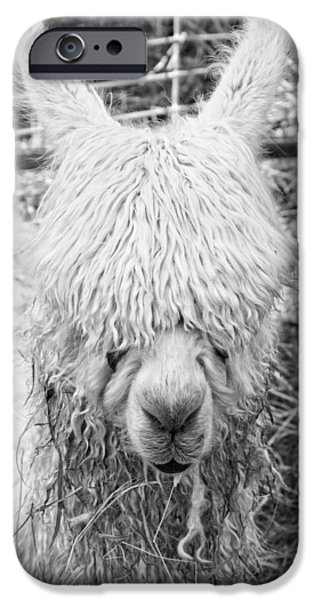 Llama Digital iPhone Cases - Black and White Alpaca Photograph iPhone Case by Keith Webber Jr