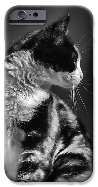 Monotone iPhone Cases - Black and White Cat in Profile  iPhone Case by Jennie Marie Schell
