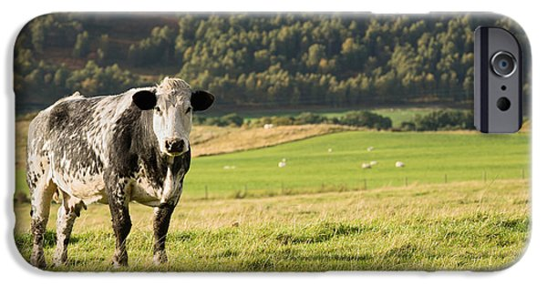 Agricultural iPhone Cases - Black and white cow iPhone Case by Jane Rix
