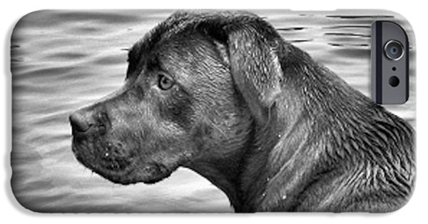 Black Dog iPhone Cases - Black and White Lab on Lake iPhone Case by Alison Margaret