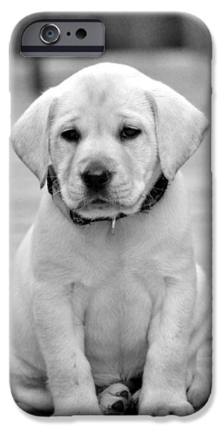 Hallmark Greeting Card iPhone Cases - Black and White Puppy iPhone Case by Kristina Deane