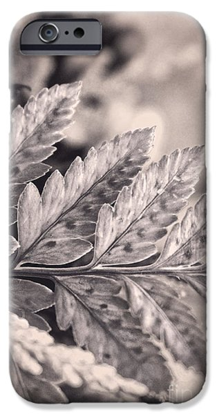 Nature Study iPhone Cases - Black and White with Lavender and Cream iPhone Case by Ella Kaye Dickey