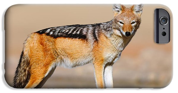 Carnivore iPhone Cases - Black-backed jackal iPhone Case by Johan Swanepoel