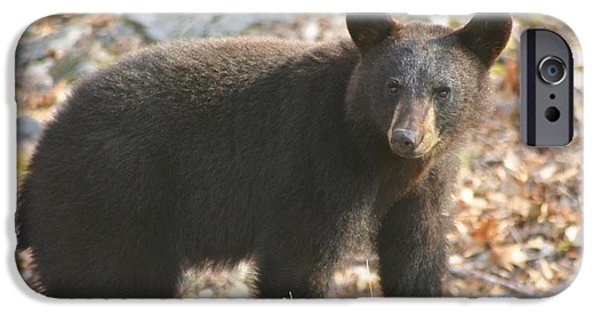 Animals Photographs iPhone Cases - Black Bear iPhone Case by Cheryl Gayser