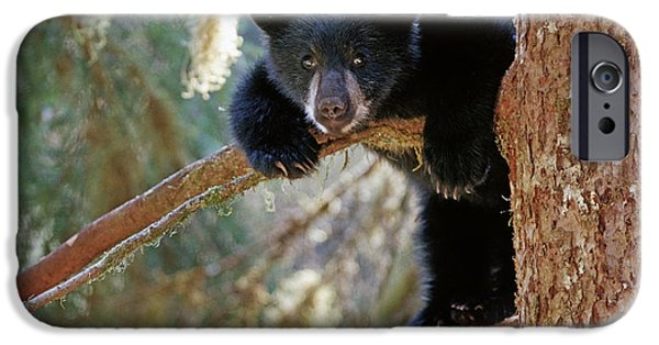 Tongass iPhone Cases - Black Bear Cub Hanging Out In Tree Anan iPhone Case by Thomas Sbampato