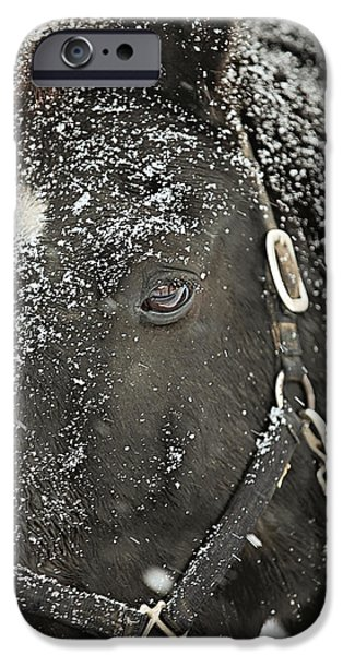 Horses iPhone Cases - Black Beauty in a Blizzard iPhone Case by Carrie Ann Grippo-Pike