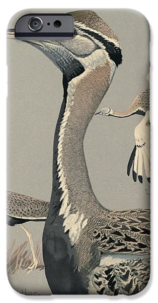 Ethiopia iPhone Cases - Black Bellied Bustard iPhone Case by Louis Agassiz Fuertes