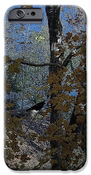 States Tapestries - Textiles iPhone Cases - Black Bird in Autumn Tree II iPhone Case by Thia Stover