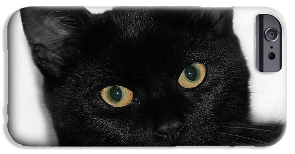 Bobcat Kittens iPhone Cases - Black Cat iPhone Case by Guna  Andersone