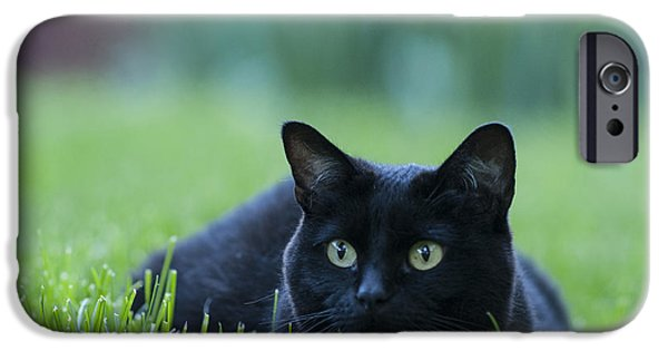 One Animal iPhone Cases - Black Cat iPhone Case by Juli Scalzi