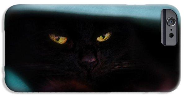 Bob Cats iPhone Cases - Black Cat Secrets iPhone Case by Bob Orsillo
