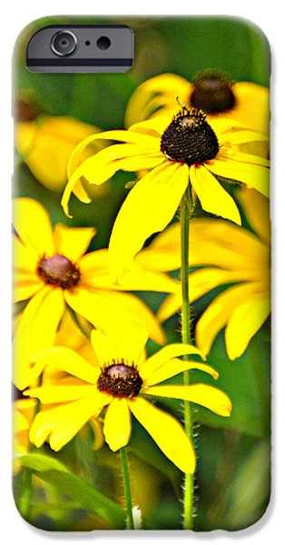 Black Eyed Susan 1 iPhone Case by Marty Koch