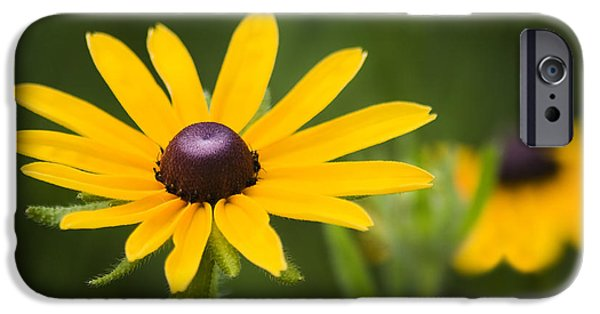Close Up Floral iPhone Cases - Black Eyed Susan iPhone Case by Adam Romanowicz