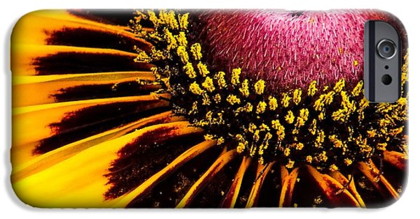 Plant iPhone Cases - Black-eyed Susan close up iPhone Case by Zina Stromberg