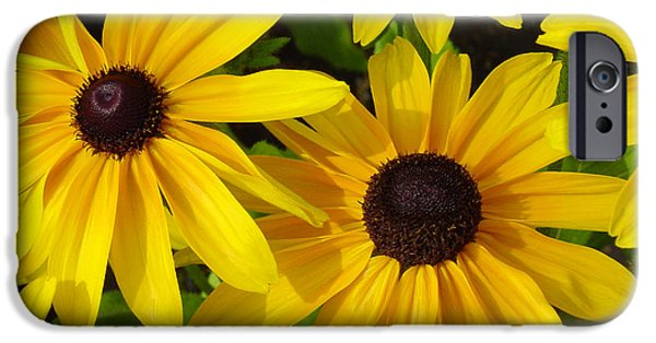 Floral Art iPhone Cases - Black Eyed Susans iPhone Case by Suzanne Gaff
