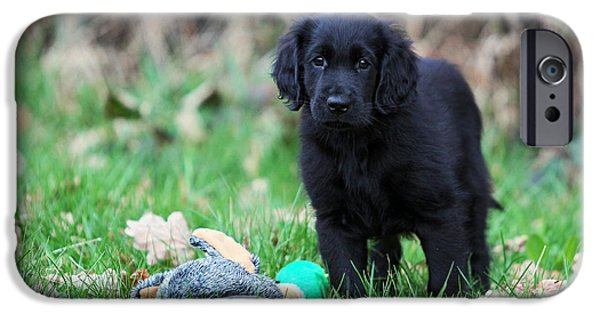 Dog Photos iPhone Cases - Black Flat Coated Retriever puppy with dog toy iPhone Case by Dog Photos
