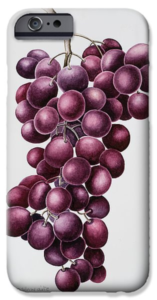 Vineyard Prints iPhone Cases - Black Grapes iPhone Case by Sally Crosthwaite