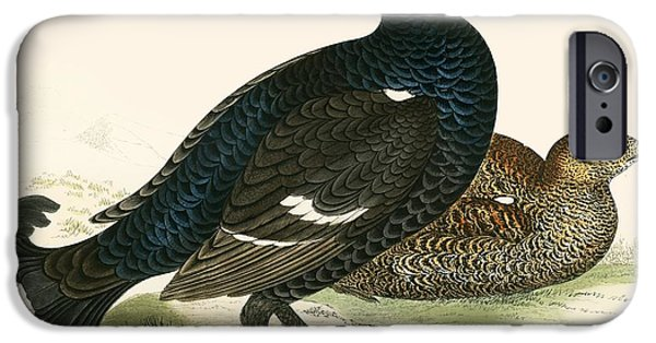 Hunting Bird iPhone Cases - Black Grouse iPhone Case by Beverley R. Morris