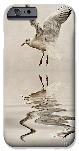 Sea Birds iPhone Cases - Black-headed gull  iPhone Case by John Edwards