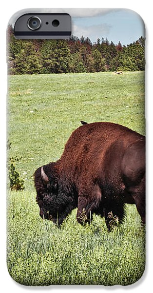 Black Hills Bull Bison iPhone Case by Robert Frederick